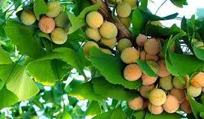 NatureBuilt 90% Chlorella 10% Ginkgo Biloba Tablets