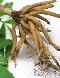 NatureBuilt 90% Chlorella 10% Valerian Tablets